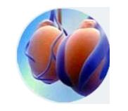 Prostalgene - Original sản phẩm có tốt không? Là thuốc gì? Có hiệu quả không?